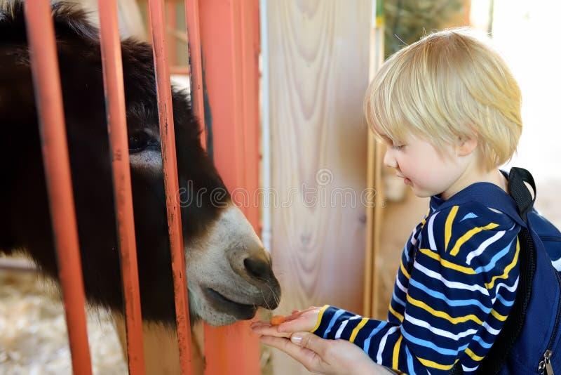 小男孩哺养的驴 孩子在动物园里 在有动物的农场哄骗获得乐趣 孩子和动物 图库摄影