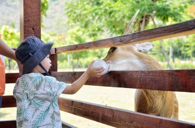 小男孩哺养的鹿在农场:特写镜头 免版税库存照片