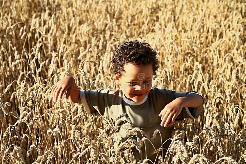 小男孩在一块麦田丢失了 库存照片
