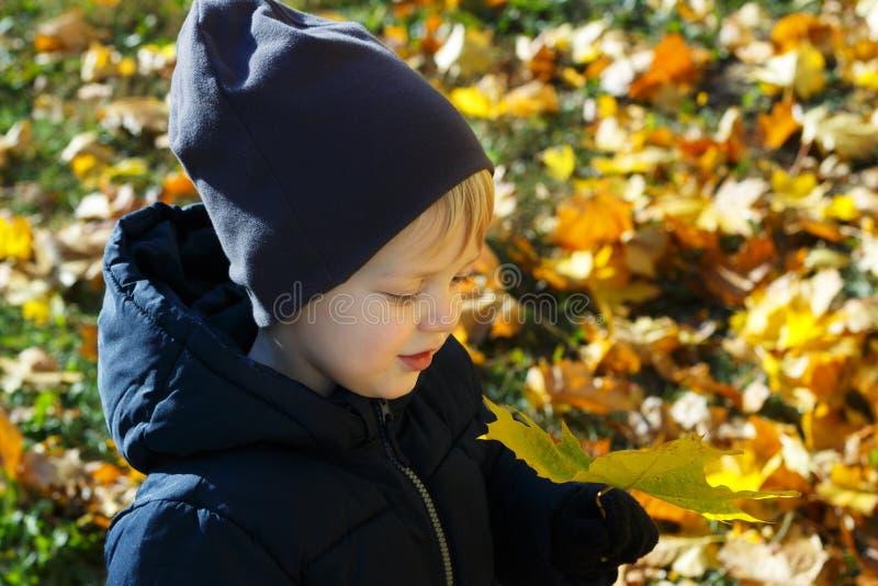 小男孩在使用与五颜六色的叶子的秋天公园 库存图片