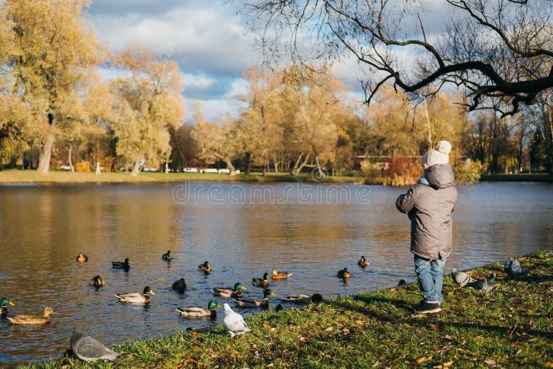 小男孩在公园池塘喂养鸭子 免版税库存照片