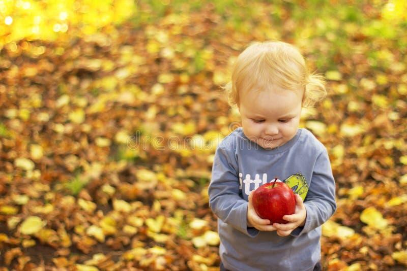 小男孩在秋天公园用一个苹果在他的手上 库存照片