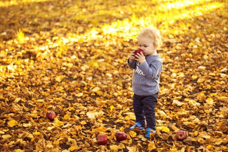 小男孩在秋天公园用一个苹果在他的手上 图库摄影