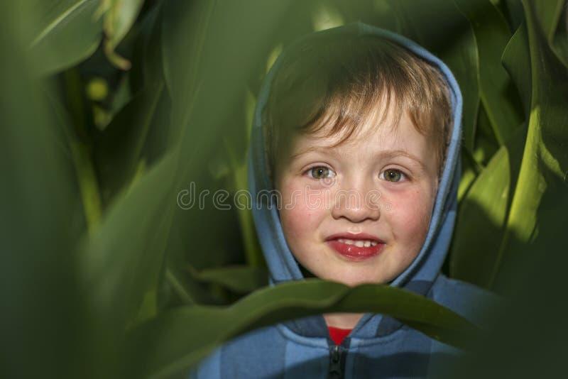小男孩在麦地掩藏 免版税库存照片