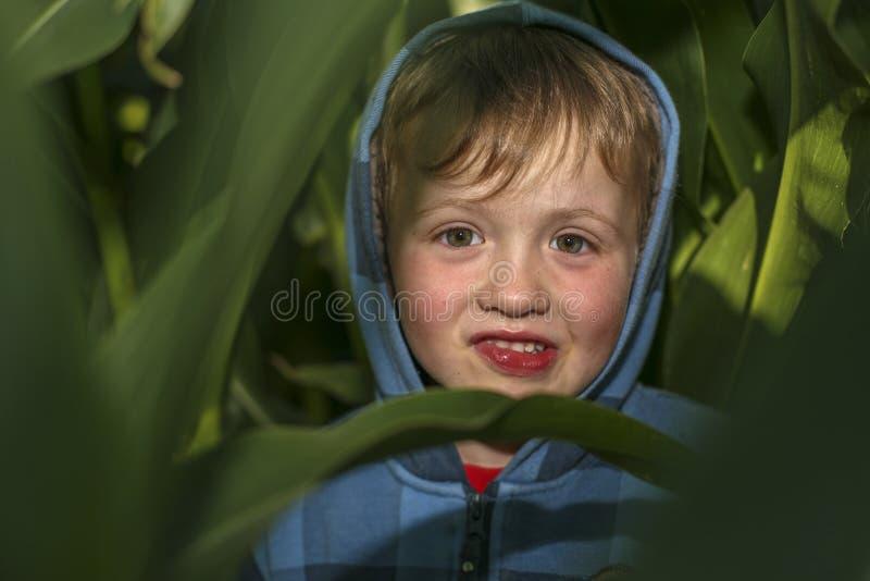 小男孩在麦地掩藏 图库摄影