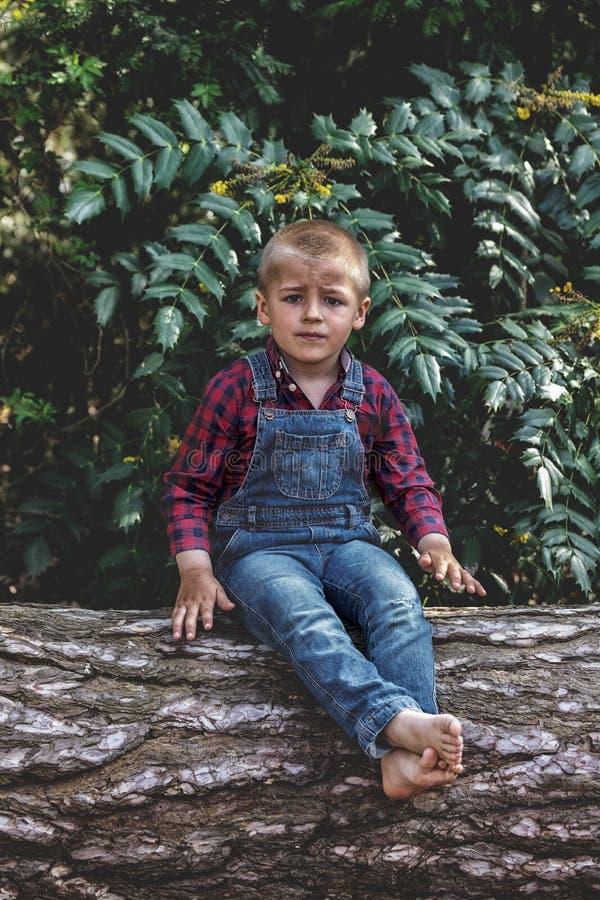 小男孩坐老树干在公园 库存照片