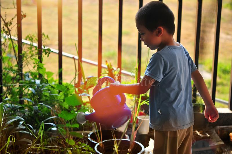 小男孩浇灌的树和花在早晨 免版税库存图片