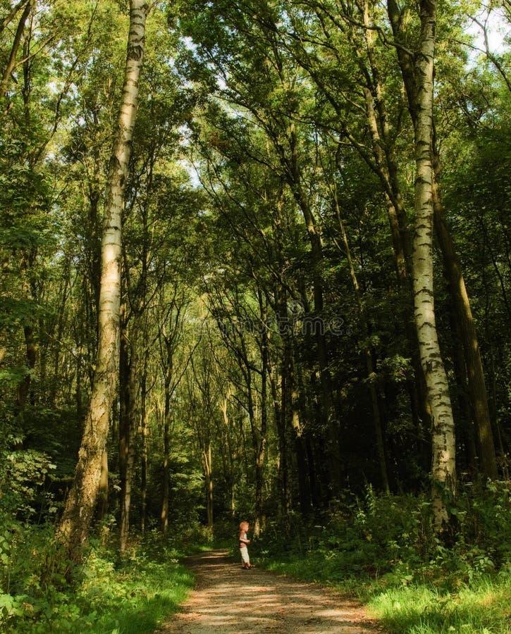 小男孩的森林 库存图片