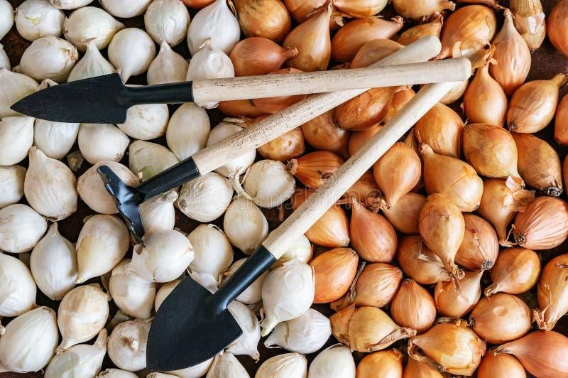 小白洋葱头织地不很细背景有种植的工具 铁锹、犁耙和瓢庭院工作的 r 库存照片