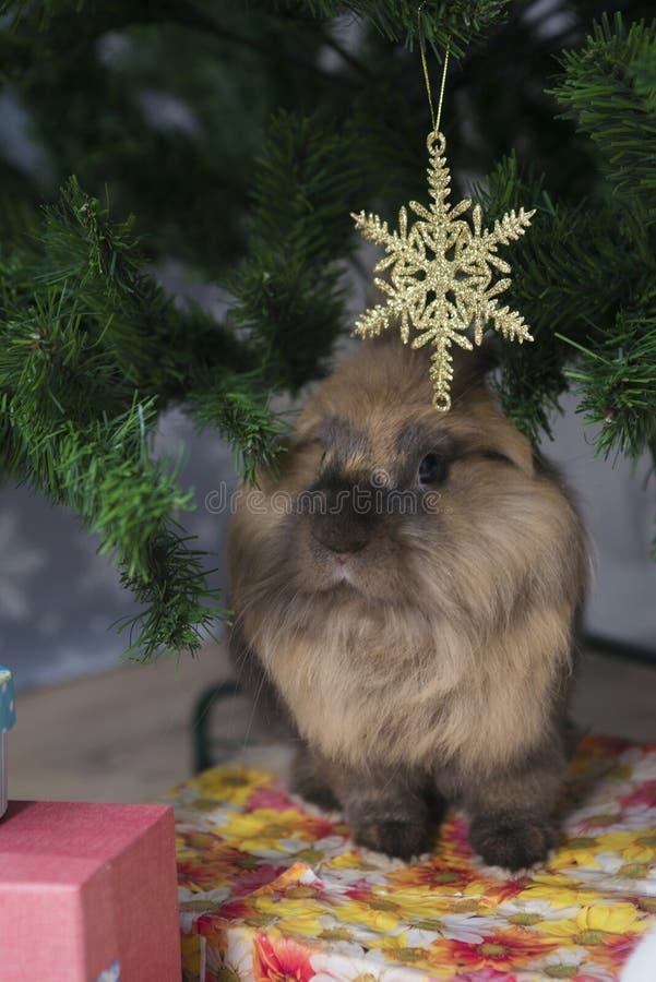 小的兔子坐在圣诞树下 免版税库存照片