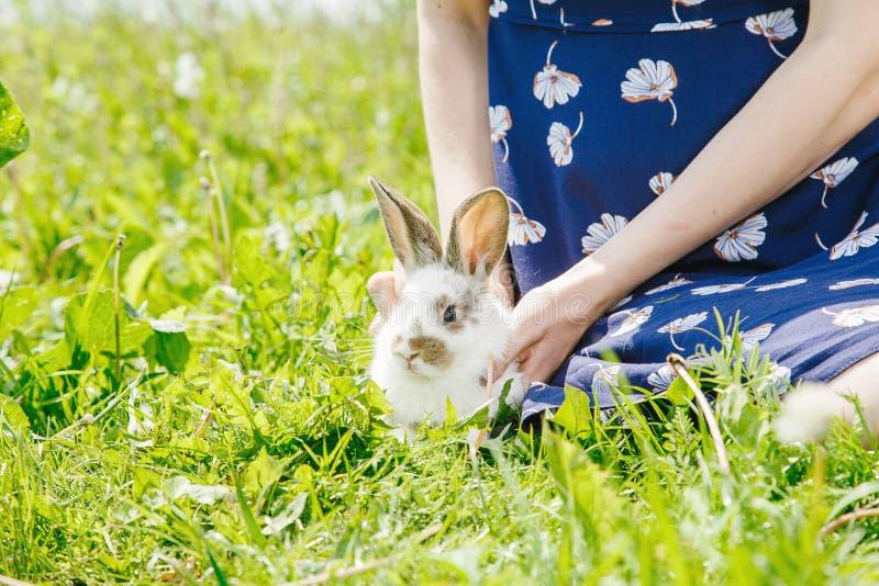 小的兔子,黑白衣服,兔宝宝吃绿色gras 库存图片