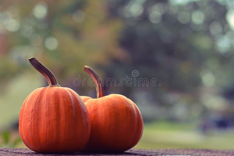 Download 小的南瓜二 库存照片. 图片 包括有 节假日, 少许, 壁架, 自治权, 背包, 橙色, 收获, 10月 - 59101676
