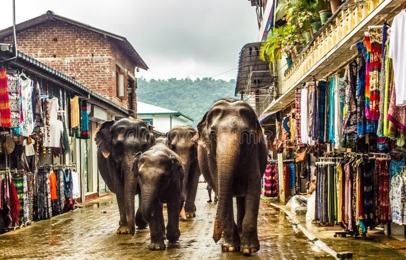 小的大象去销售 库存图片