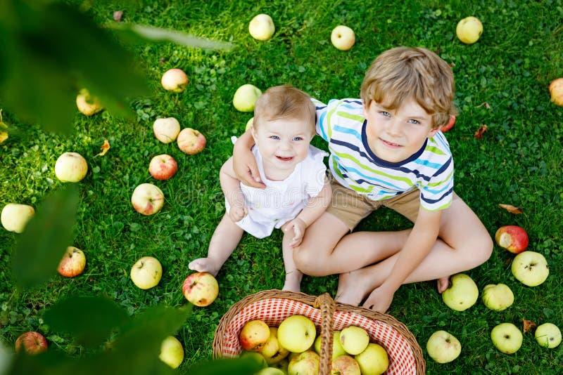 小的女婴和幼儿园哄骗使用在苹果树果树园的男孩 库存图片
