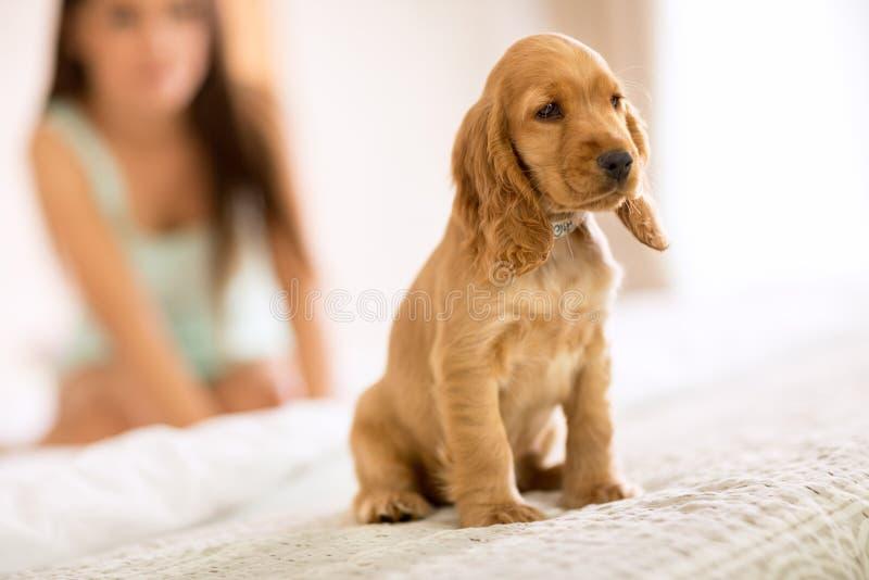 小的小狗猎犬种族坐女孩床 图库摄影