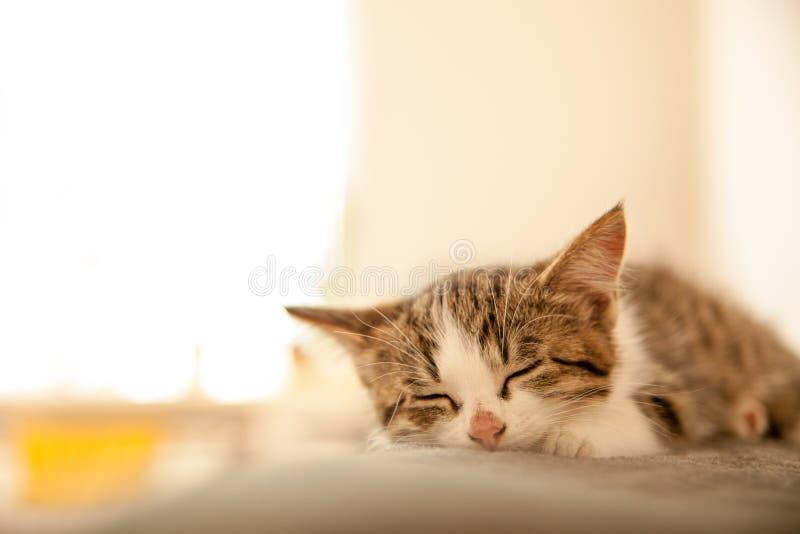 小的小猫在床罩睡觉 小猫甜甜地睡觉作为一张小床 睡觉猫在迷离的家点燃背景 免版税库存图片