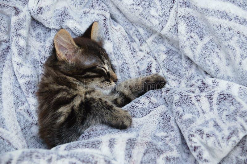小的小猫在灰色格子花呢披肩睡觉 o 库存图片