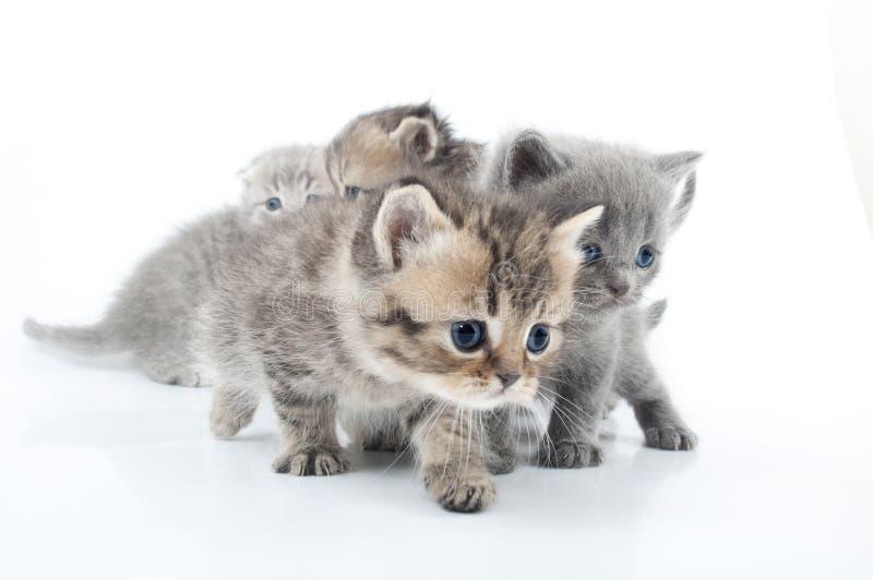 小的小猫工作室射击查出在白色 库存图片