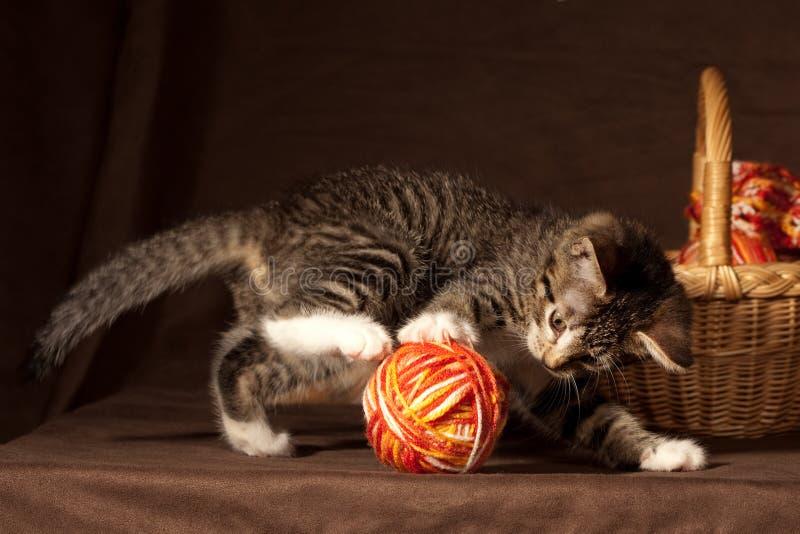 小的小猫 图库摄影
