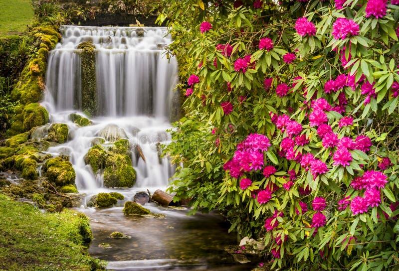 小的布列德瀑布和杜鹃花 库存照片