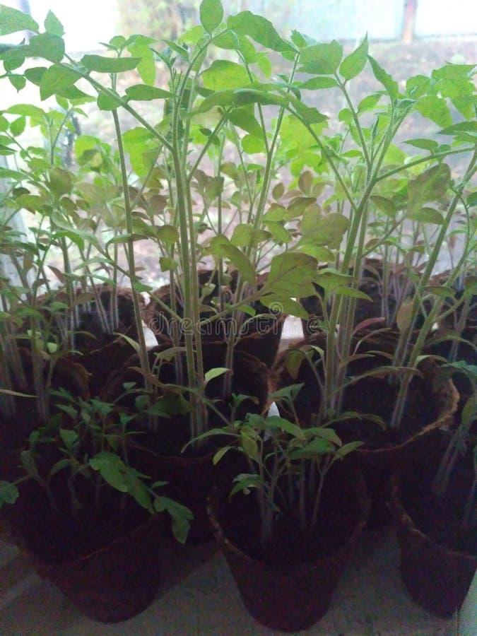 小的开花植物我生长了自己 免版税库存照片
