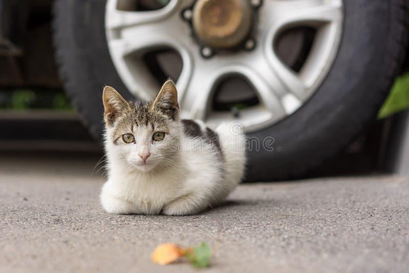 小的无家可归的小猫 库存图片