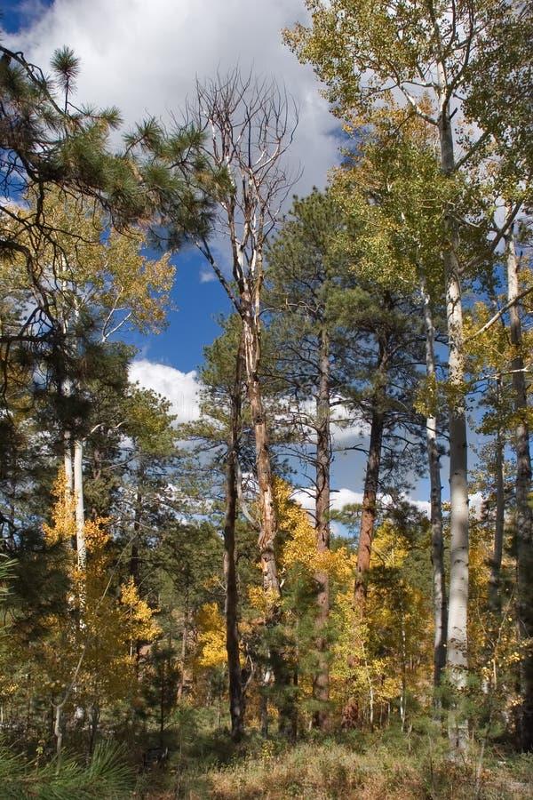 小的树丛 免版税库存图片