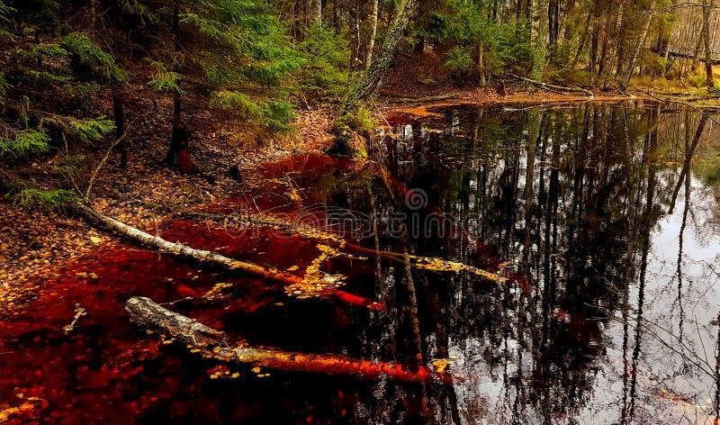 小的森林湖 库存图片