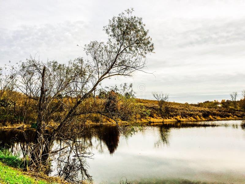 小的池塘 免版税库存照片