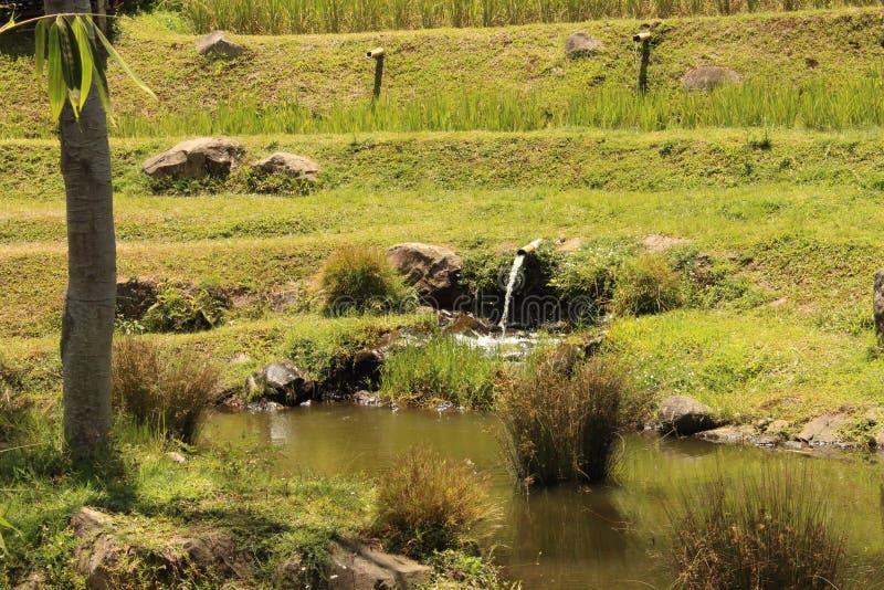 小的池塘 免版税图库摄影