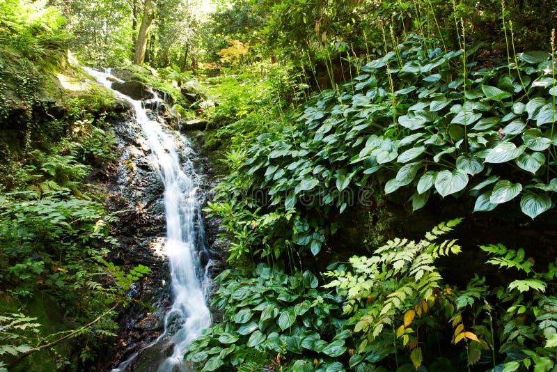 小的瀑布森林 库存图片