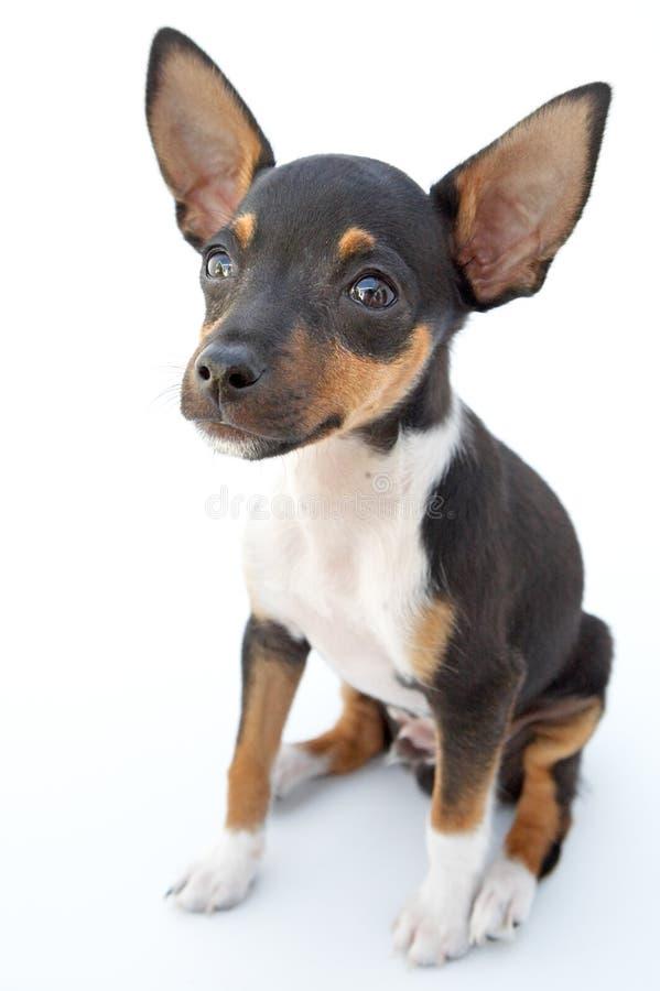 小的狗 库存图片