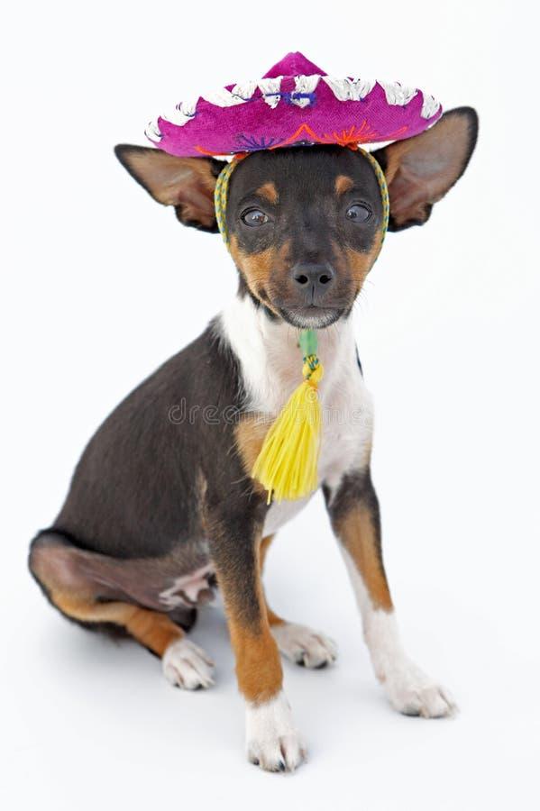 小的狗 免版税库存照片