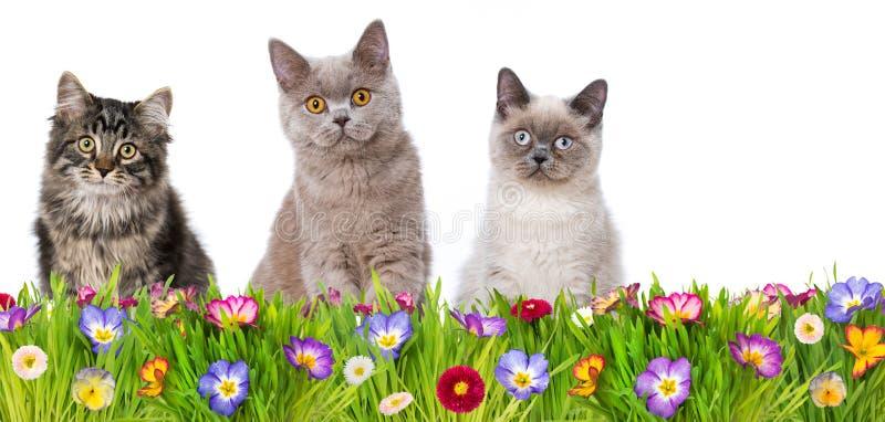 小的猫在春天花草甸 免版税库存图片