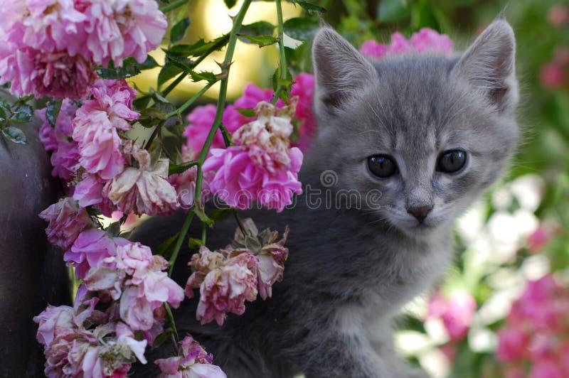 小的猫 图库摄影