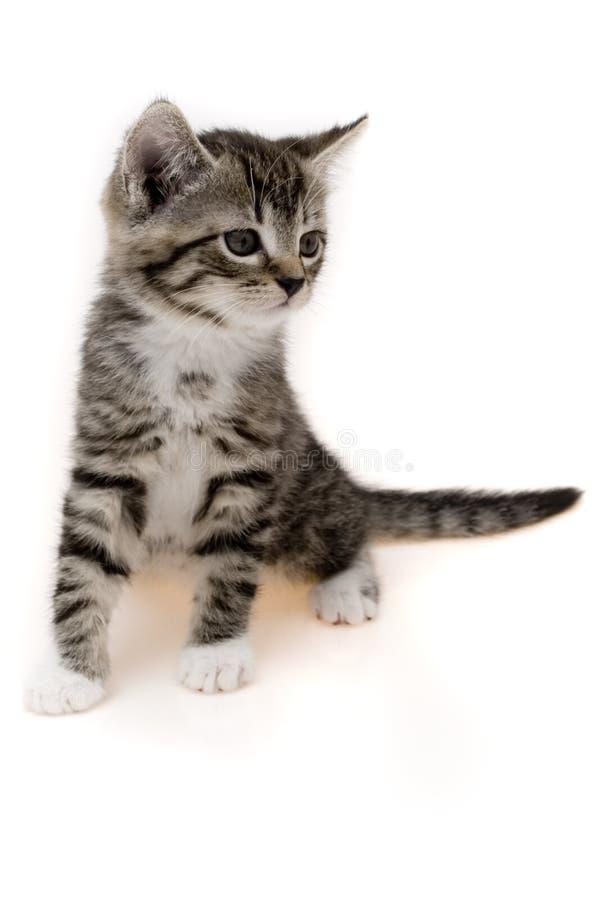 小的猫 免版税图库摄影