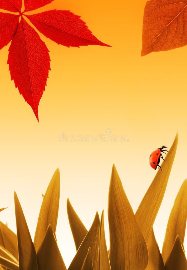小的瓢虫 图库摄影