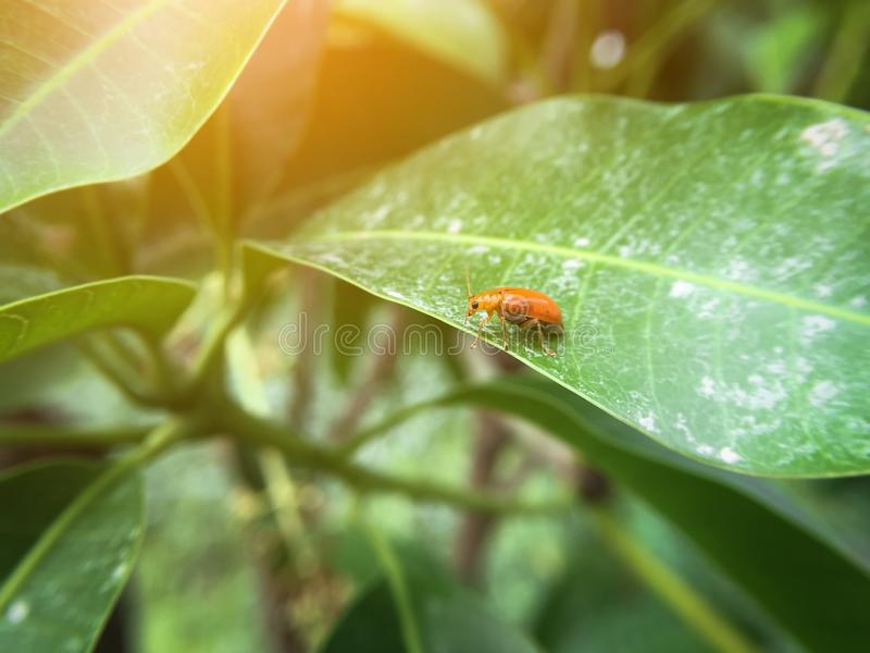 小的瓢虫 库存图片