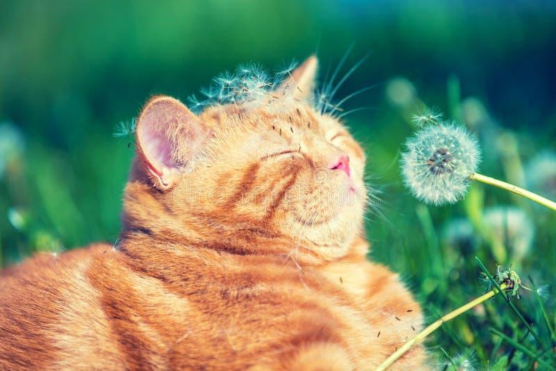 小的红色小猫在庭院里 免版税库存图片