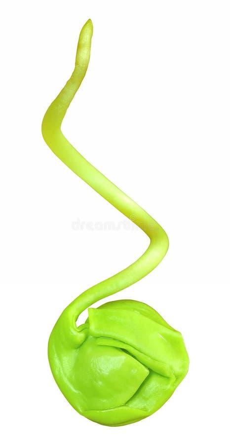 小的绿色植物 免版税库存照片