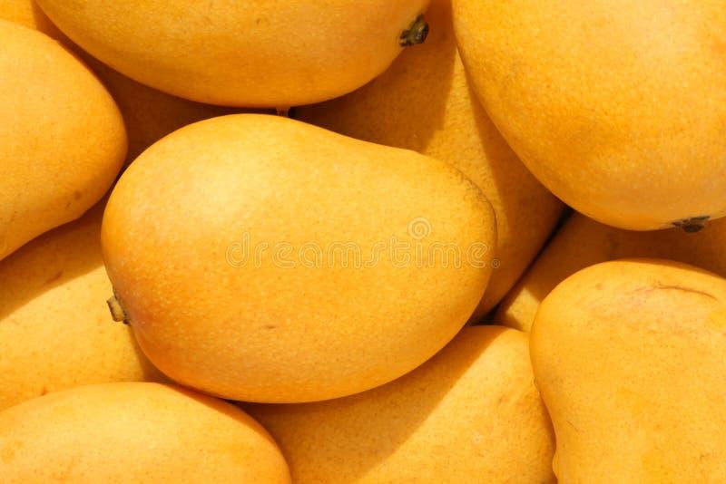 小的芒果 库存图片
