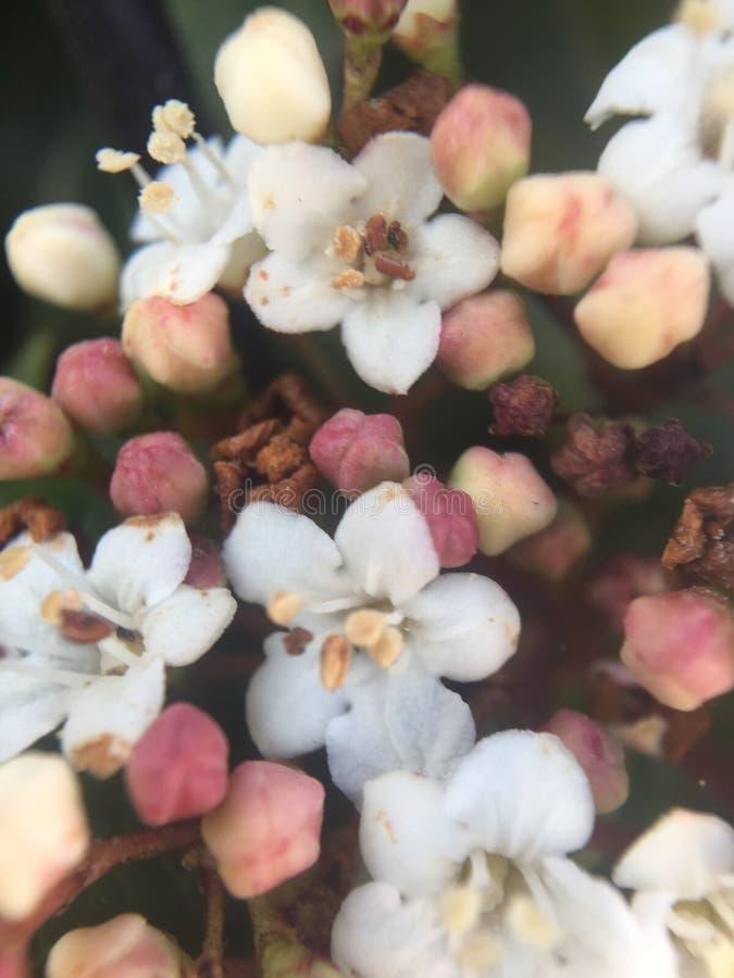 小的花的宏观方式 库存图片