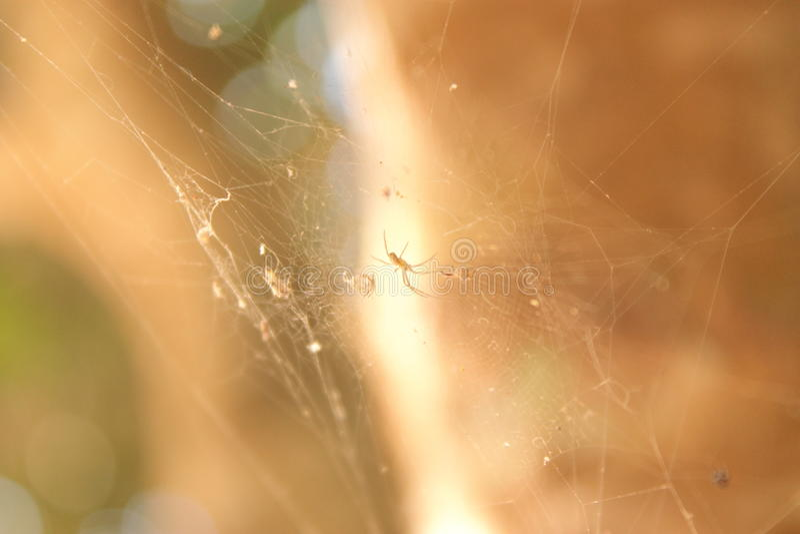 小的蜘蛛 库存照片