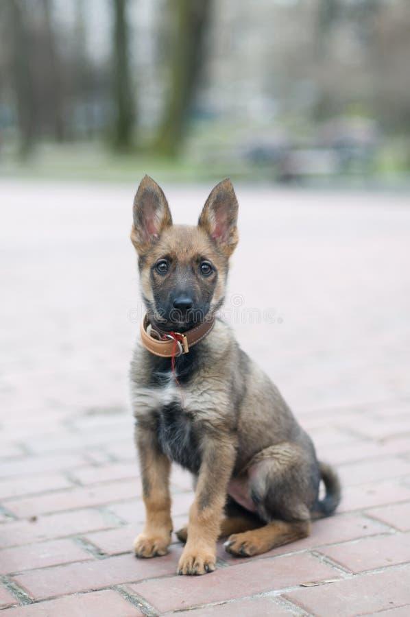 小的逗人喜爱的小狗在公园 图库摄影