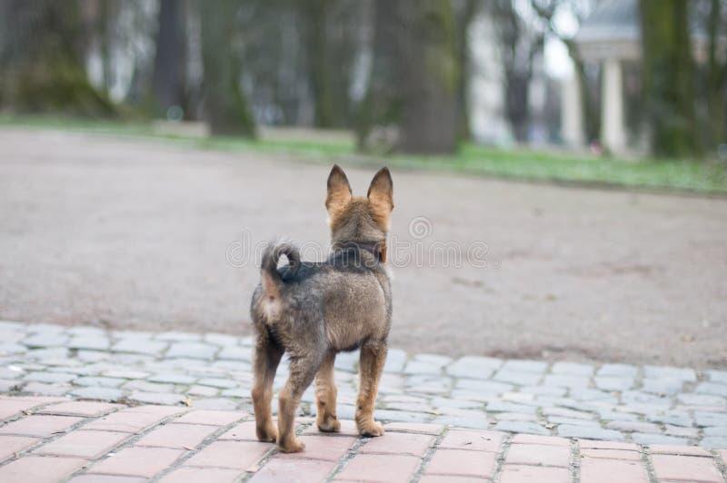 小的逗人喜爱的小狗在公园 库存照片