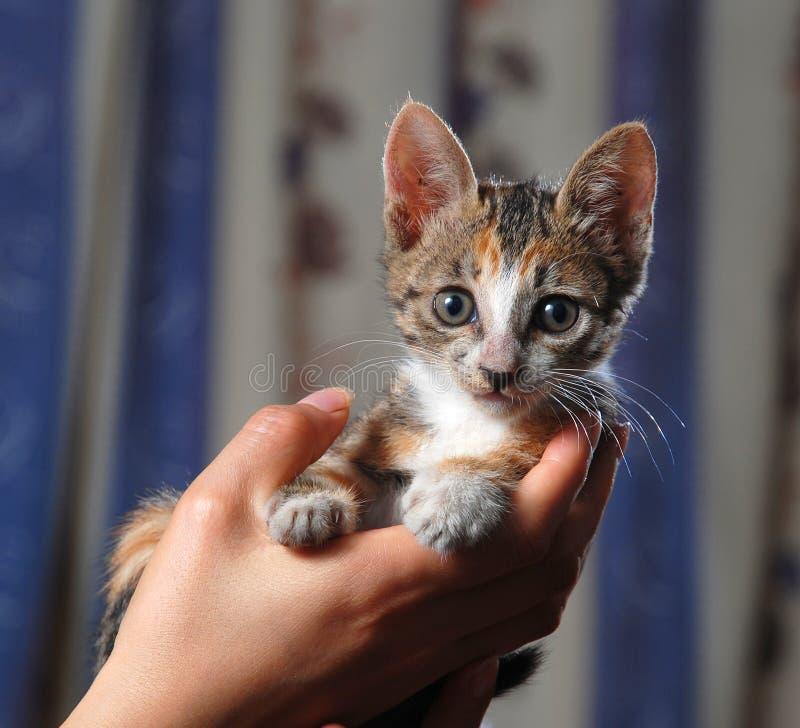 小的逗人喜爱的猫 免版税库存图片