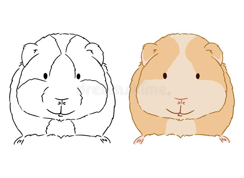 小的逗人喜爱的试验品的例证在白色背景的 小豚鼠手拉的传染媒介艺术有益于上色孩子的 向量例证