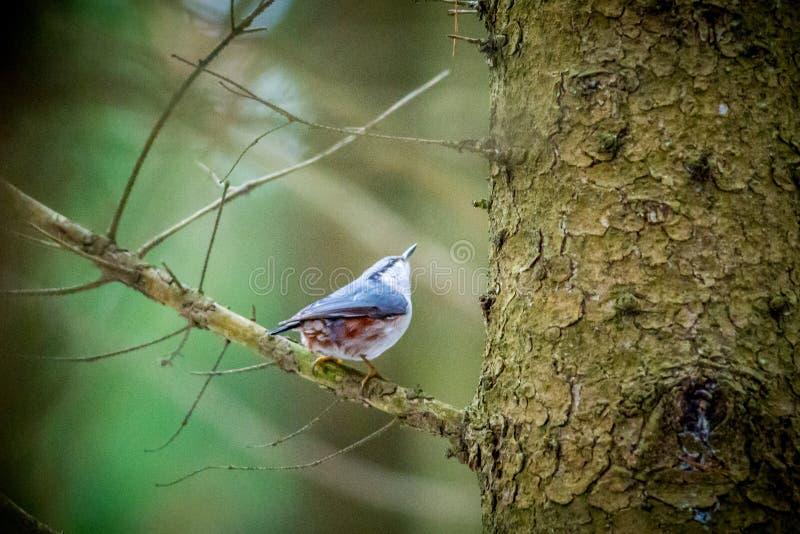 小的鸟在森林里 免版税库存图片