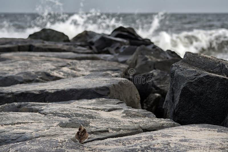 小的鸟-大世界 免版税库存照片