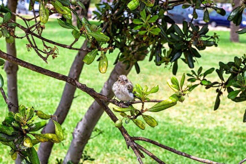 小的麻雀坐一个树枝在公园 库存图片